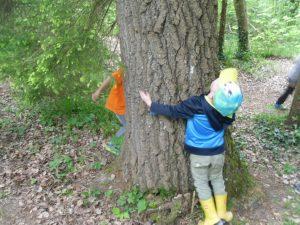 """""""Ja, wie dick ist denn der Baum?"""""""
