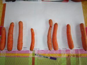 Für unseren Schneemann wurde die größte Karotte gesucht.